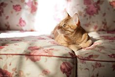 Like the 60s rock song...Goood Day, Sunshine....da da dahhh....Good Day Sunshine.... here's a cat version verse as follows:  I sit alone ...upon this warm, soft couch...me the cat yet listening for a mouse...the humans sleep....I know I am NOT Alone...I wait patiently to catch the mouse in home....Good Day Sunshine...Good Day Kitty is Fine... LOL