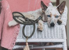 Animals in Charge created durable, beautiful, and Earth friendly goods for your animal