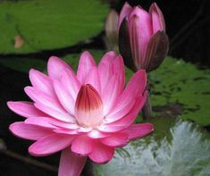 Lotus art journal cover inspiration.