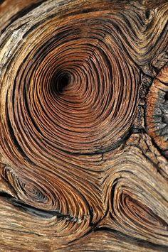 Wood ~ The beauty that comes from years of cold, wind and harsh living