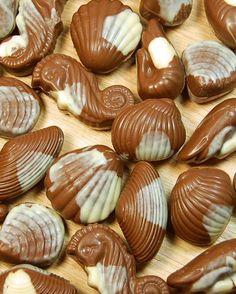 Belgian Chocolate Seashells.