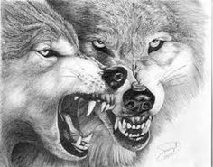 Image result for snarling wolf drawing