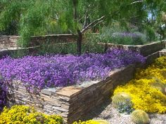 desert landscaping inspiration