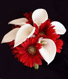 Red Gerbera Daisies and Calla Lilies Bouquet