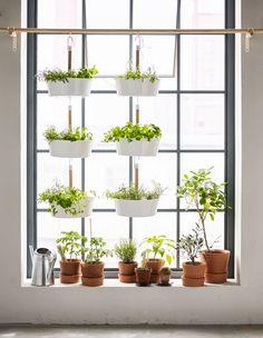 Balcony hanging plants, plants on window sill, ikea hanging planter, hanging pots kitchen Hanging Herbs, Hanging Planters, Diy Hanging, Hanging Herb Gardens, Herb Planters, Window Hanging, Plant Pots, Plant Wall, Plant Design