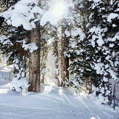 Zima, snieg i las  | www.shakeit.pl