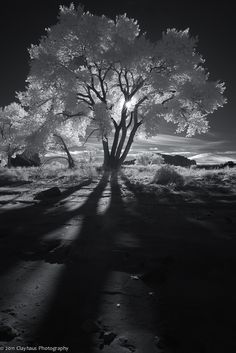 Infrared Shadows. Love infrared