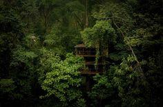 crazy tree house