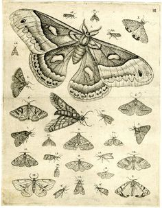 Plate depicting numerous butterflies, moths and flies against a blank background  Etching