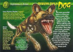 Name: African Wild Dog Category: Nightmares of Nature Card Number: 113 Front: African Wild Dog Nightmares of Nature Card 113 front Back: African Wild Dog Nightmares of Nature Card 113 back Trading Card: Dog Facts, Animal Facts, Monster Book Of Monsters, African Wild Dog, Interesting Animals, Wild Creatures, Animal Species, Wild Dogs, Animal Projects