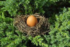 계란, 소켓, 최적화, 치수, 적합, 단지 아이, 포장, 부드러운, 콘센트