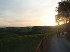 vignes autour de Vienne http://www.trace-ta-route.com/bienvenue-vienne-la-ville-des-palais-des-vignes/ #TraceTaRoute www.trace-ta-route.com