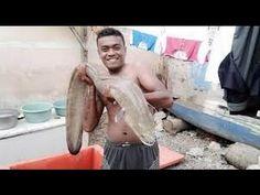 Mancing Belut Raksasa  Besar Sungai Mahakam