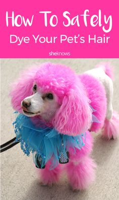 How to safety dye your pet's hair! Safe Hair Dye, Safe Hair Color, Dog Hair Dye, Dog Dye, Pink Dye, Pink Hair Dye, Galaxy Jar, Diy Galaxy, Poodle Hair