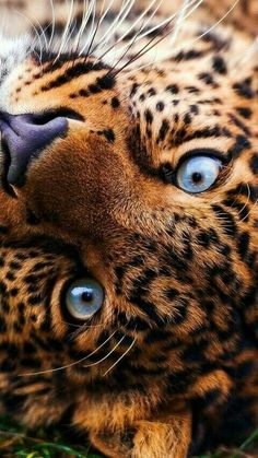 What amazing eyes!!! Such beauty, those eyes i could look into them for ever