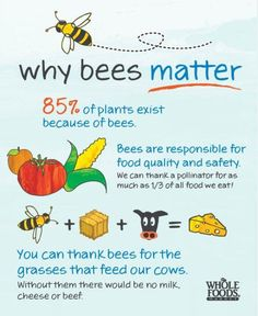 Bees are essential!!!