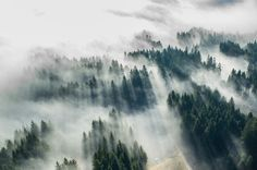foggy forrest | Tumblr