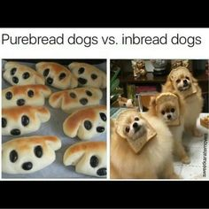Which type of dog do you prefer?