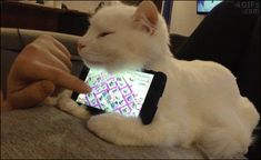 A cat acts as a cradle for a smartphone
