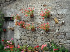 geraniums sur la grange