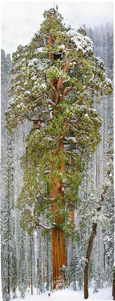 Awesome tree.