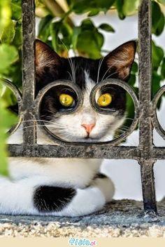 Te koty pojawiły się w idealnym momencie