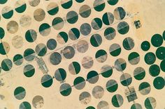 Crop Circles in Sharq El Owainat : Image of the Day : NASA Earth Observatory
