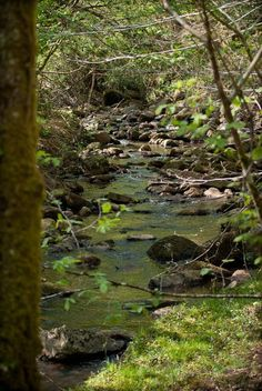 Río en Monte Aa (Saja). Cantabria.