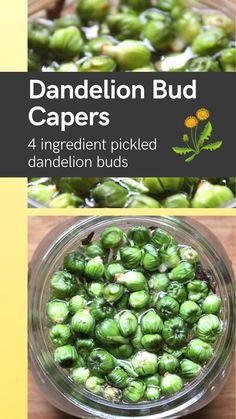 Dandelion Recipes, Edible Wild Plants, Vegetarian Recipes, Healthy Recipes, Maila, Wild Edibles, Fermented Foods, Canning Recipes, Food Hacks