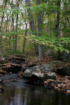 Fish Brook, Hardwick, Massachusetts by c.buelow via Flickr