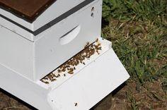 Homestead Revival: Beehive Update