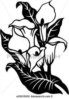 clip-art-cala-lily-calla-flower-varieties-fotosearch-299961.jpg (325×470)
