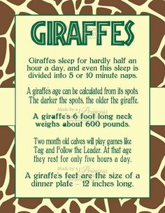 Safari Wild Adventure Printable Giraffe Facts Poster, and their tongues are purple and very long: inches Zoo Animals, Animals And Pets, Cute Animals, Large Animals, Beautiful Creatures, Animals Beautiful, Giraffe Facts, Safari, Okapi