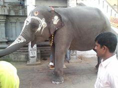 Kanchipuram - The holy elephant