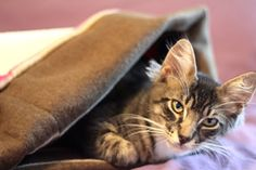 How to make a cuddle sack for your small pet | Magazines.com #DIY