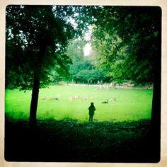 Für den Spaziergang im Frühling: #Wildpark Grafenberg
