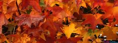 fall facebook cover images - Google Search