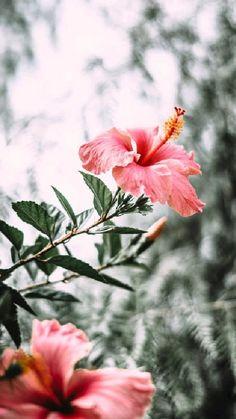 Yellow Hibiscus, Hibiscus Tea, Hibiscus Wedding, Hibiscus Flowers, Edible Flowers, Exotic Flowers, Hibiscus Bouquet, Blue Flowers, Hibiscus Garden