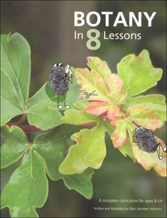 Botany in 8 Lessons | Main photo (Cover)