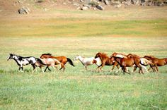 Visit the Black Hills Wild Horse Sanctuary in South Dakota Wild Horses Running, Horse Information, Majestic Horse, Most Beautiful Animals, Wild Mustangs, All The Pretty Horses, Wild Ones, Wild And Free, The Dreamers