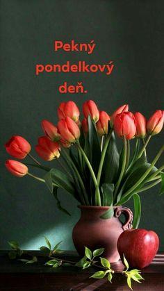 Night, Den, Plants, Flora, Plant, Planting