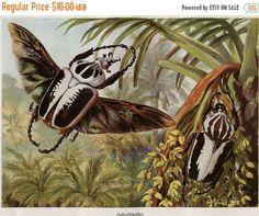 SALE Vintage Print Goliath Beetles Brehms by CarambasVintage