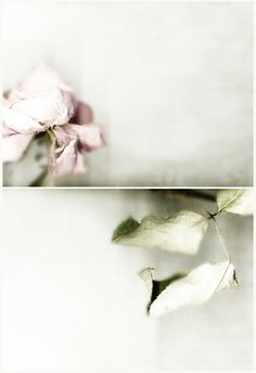 Lovely floral photography and colours Belle Image Nature, Photoshop, Love Flowers, Belle Photo, Photo Art, Bloom, Delicate, Colours, Pure Products