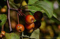 Jesień i jesienne fotografie » MRACH Fotografie