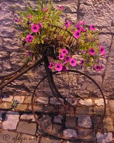 Rusty bike and basket for flowers