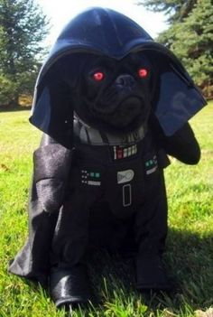 Darth Pug. | 26 Costumes That Prove Pugs Always Win At Halloween