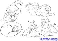 Welcome to the tutorial to draw husky. You can find a lot of tips about the husky drawing with a lot of interesting thing, information too. Cute Animal Drawings, Animal Sketches, Husky Tattoo, Husky Drawing, Gravure Laser, A Husky, Nerd, Anime Animals, Draw Animals