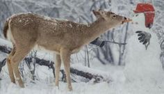 Craziest Whitetail Deer Photos