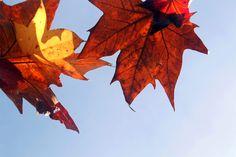 #hojas #cielo