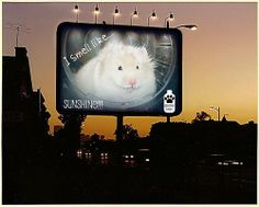 After the great response with Pongo mugs and T-shirts, one of my contacts (Cindy) suggested the next place for Pongo was on a billboard. Well, what a dream come true.....here she is making her debut for hamster shampoo and I think she looks fluffed t Funny - Hilarious Signs & Billboards